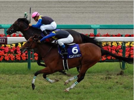 【競馬】デニムアンドルビーとかいう馬