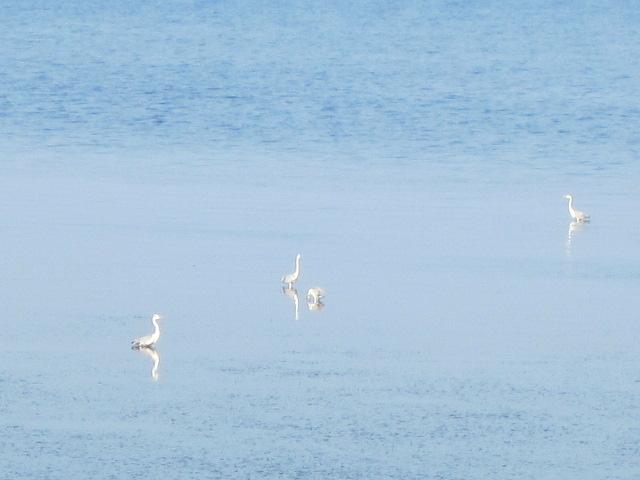 サロマ湖の鳥