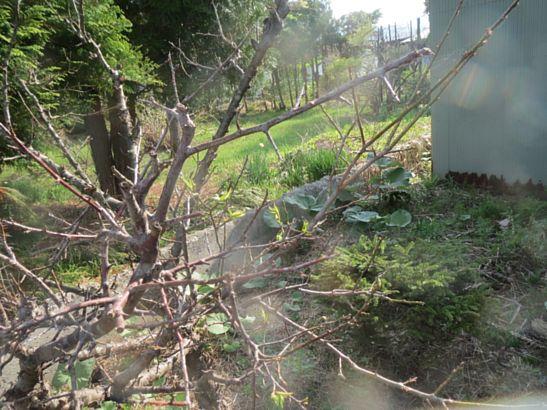 我が家の庭(5月3日)