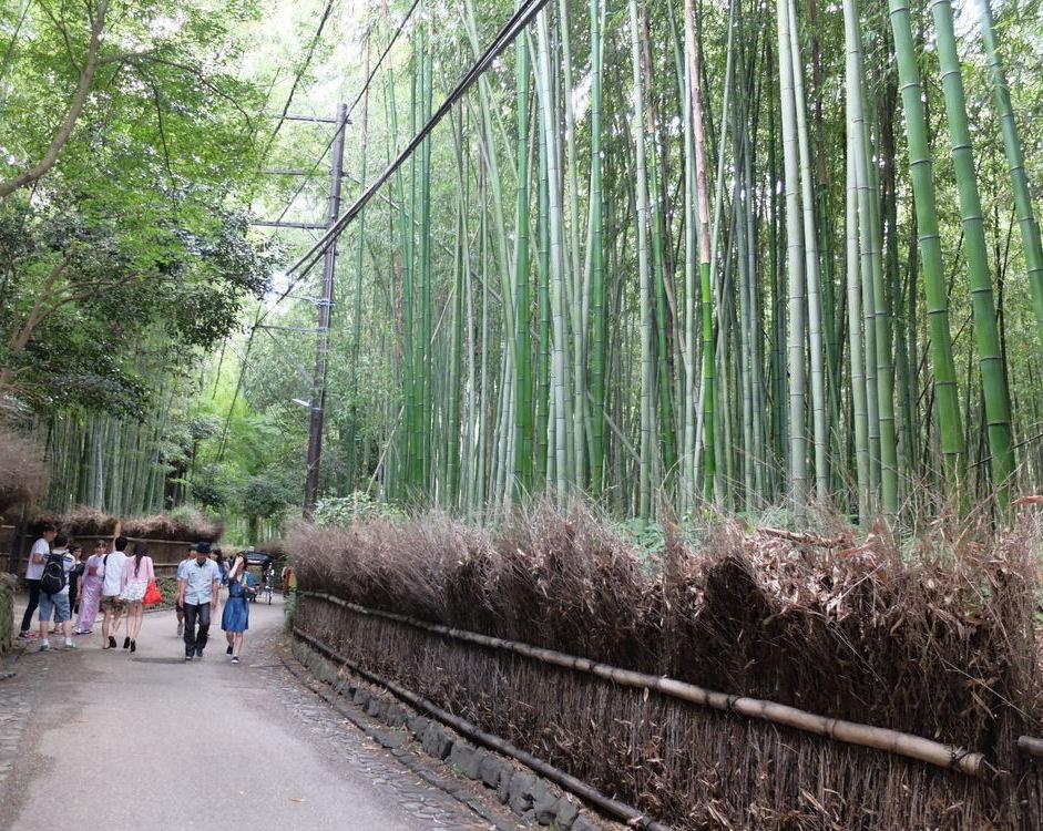 京都・嵐山 竹の小路01