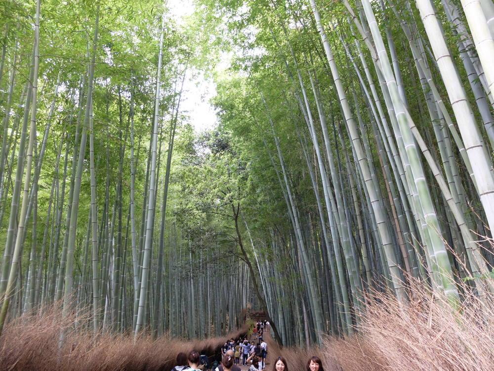 京都・嵐山 竹の小路06