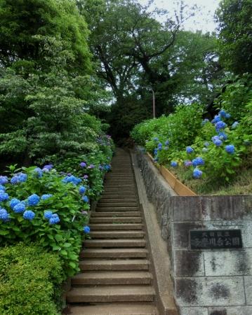 CIMG5238多摩川台公園