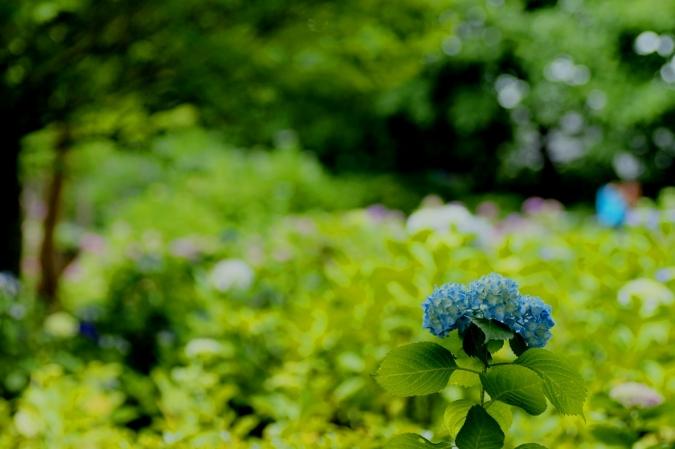 DSC04648多摩川台公園