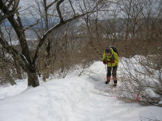 積雪で枝が