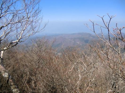 山頂部のアカヤシオは固いつぼみ