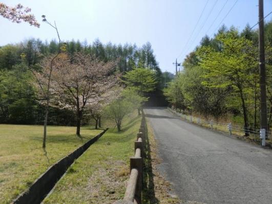 桜咲く舗装路から
