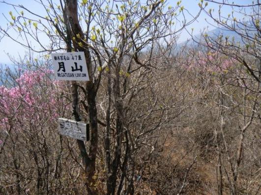 山名板のすぐ右が下山路