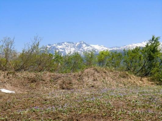 カタクリ畑と八海山