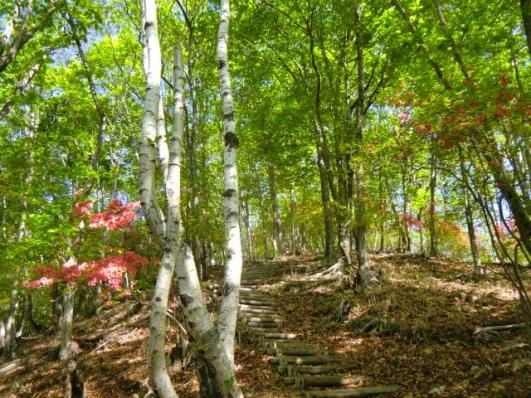 ヤマツツジ咲く階段道