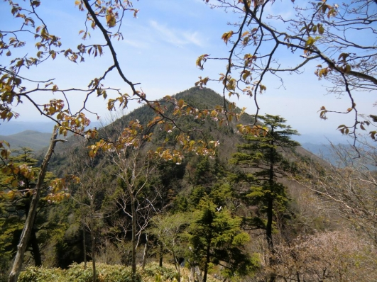 ミネザクラと前袈裟丸山