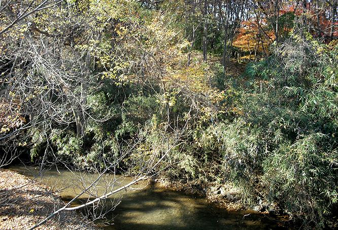 0121_23_橋上から淵の森