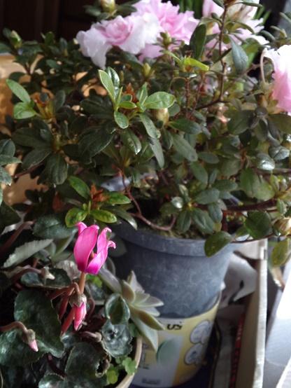 花咲く・繁る (3)
