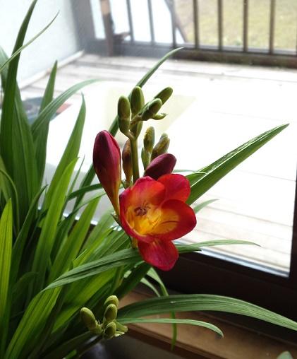 春の先触れ (2)