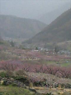 2007年4月のあんずまつり (2)