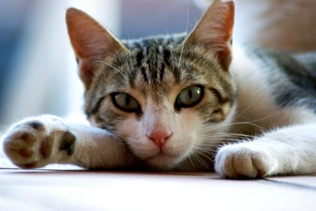 cat-255948_1280.jpg
