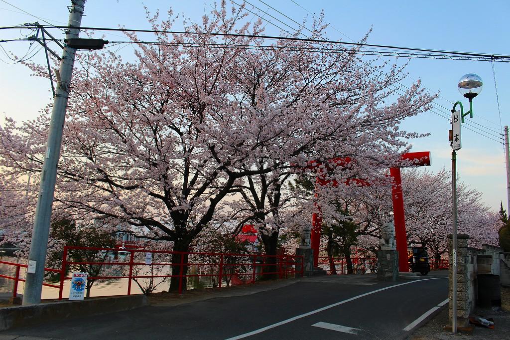 群馬 伊勢前 御嶽山白龍神社 桜 01