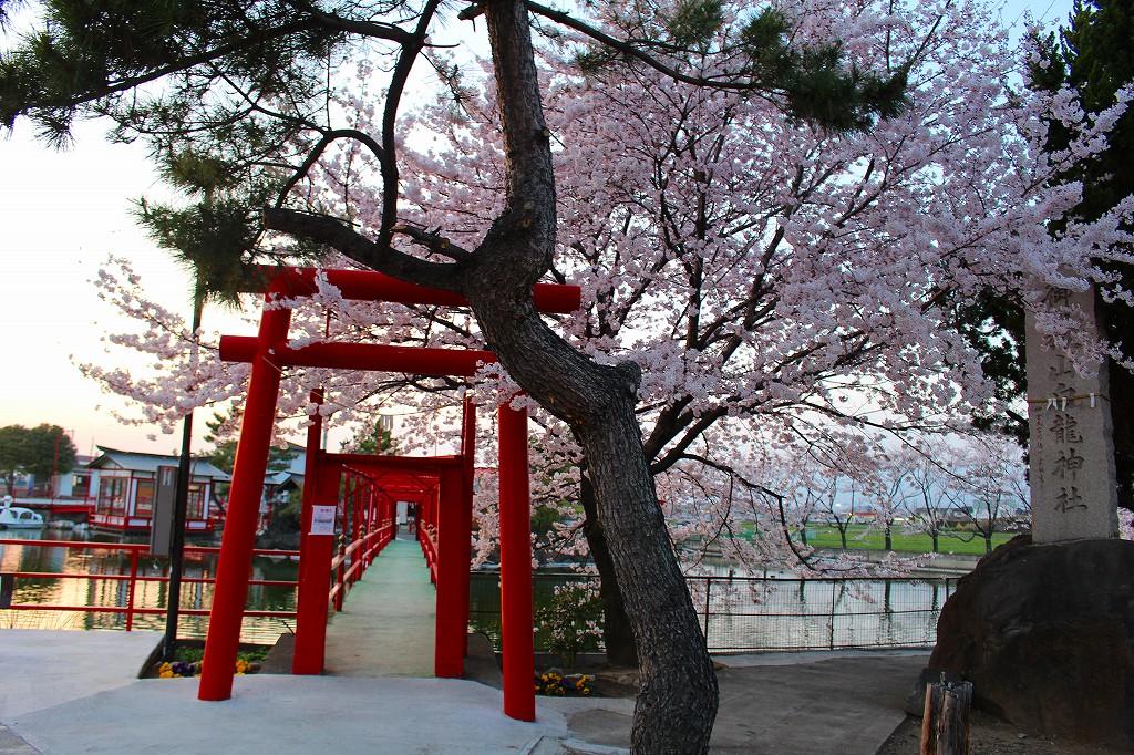 群馬 伊勢前 御嶽山白龍神社 桜 07