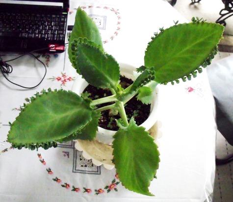 20150706 植物 032-2