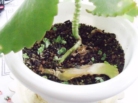 20150706 植物 062-2
