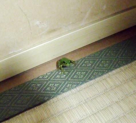 20150707 室内のかえる 011-2