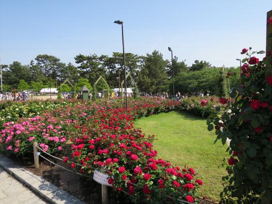 浜寺公園のフリマやバラ園17