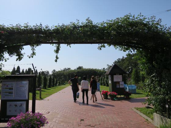 浜寺公園のフリマやバラ園19