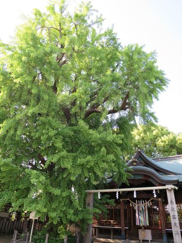 白山神社に初詣2015-06