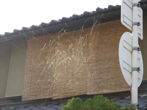 白山神社に初詣2015-13