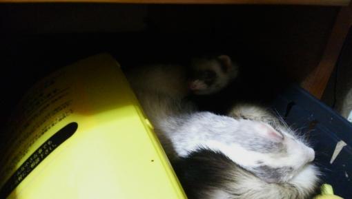秘密基地で眠るマルコ