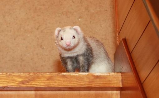 階段から見下ろすマルコのアップ