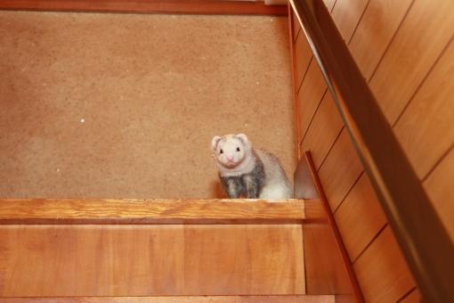 階段から見下ろすマルコ