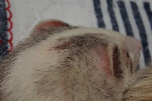 マルコの後頭部から出血2