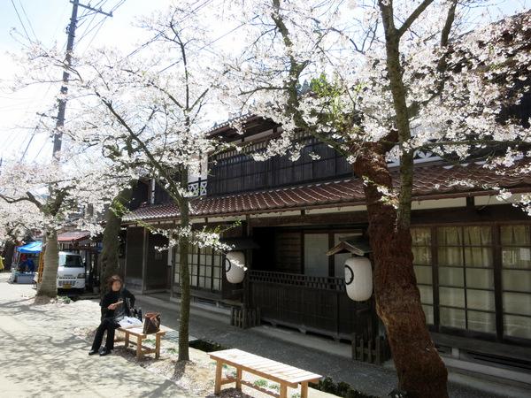 凱旋桜2015⑤