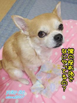 yuruiro20150312_k006