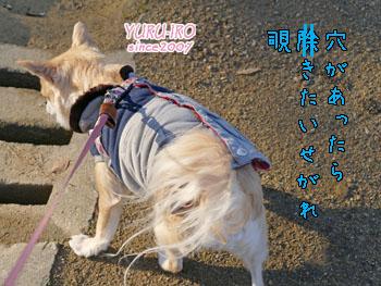 yuruiro20150311_k005a