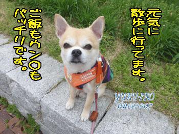 yuruiro20150415_k002