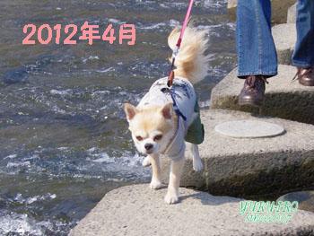 yuruiro20150420_k005