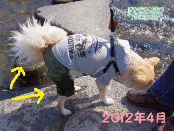 yuruiro20150420_k006