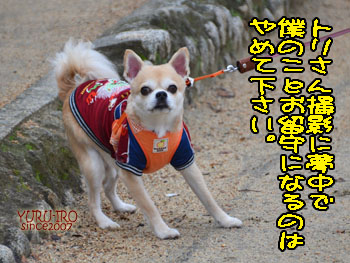 yuruiro20150105_k003