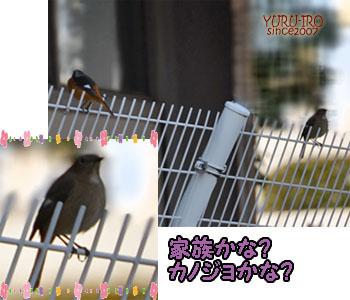 yuruiro20150105_k004