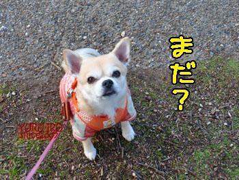 yuruiro20150109_k003