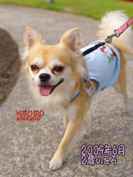 yuruiro20150116_k002