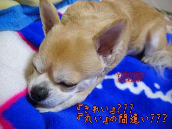 yuruiro20150116_k004