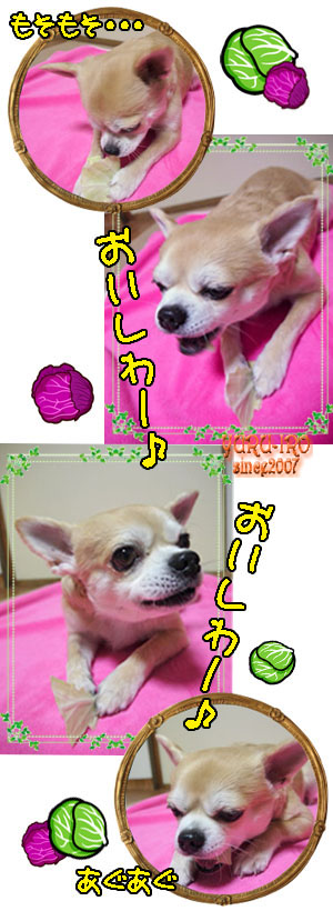 yuruiro20150211_k000