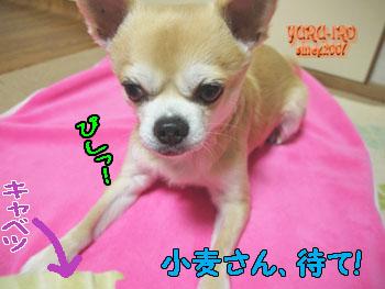 yuruiro20150211_k001