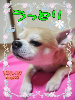 yuruiro20150211_k004