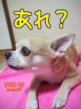 yuruiro20150211_k005