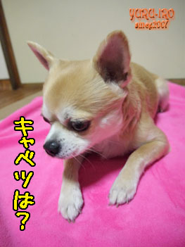 yuruiro20150211_k006