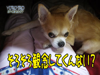 yuruiro20140130_k001