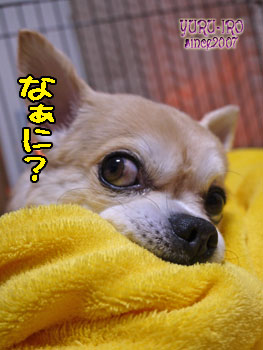 yuruiro20140204_k003